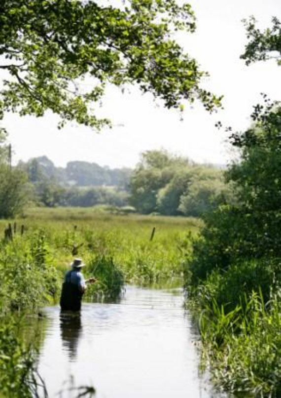 A man fly-fishing in the calm waters of a shallow river, surrounded by overhanging vegetation and countryside views beyond